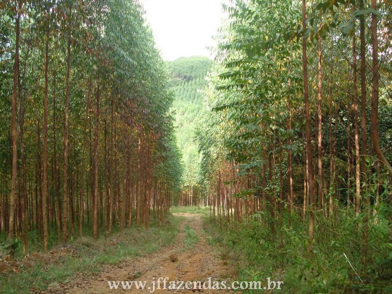 Fazenda de Eucalipto em Belmiro Braga – MG – 120 hectares