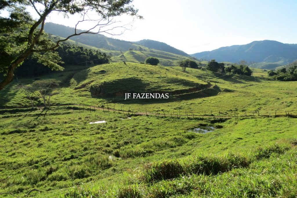 Fazenda Centenária – 259 hectares – Belmiro Braga – MG
