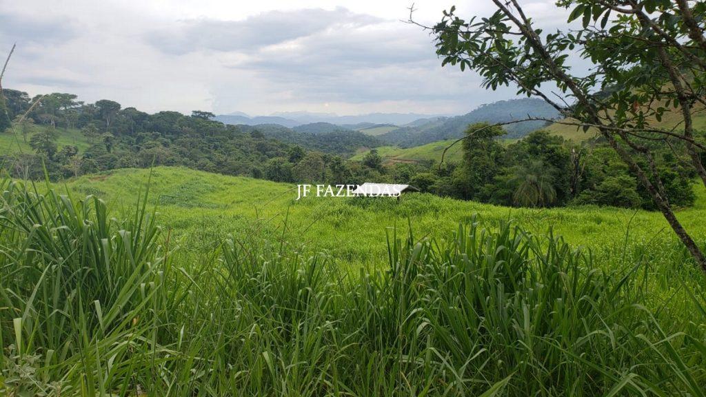 Fazenda em Simão Pereira – MG – 250 hectares
