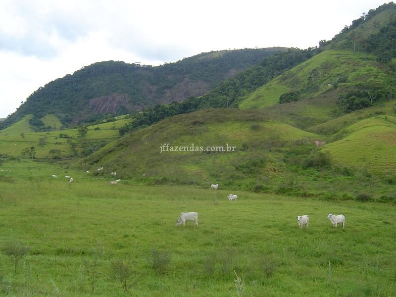 Fazenda em Leopoldina – MG – 522 hectares