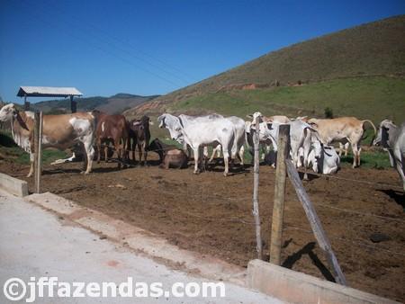 Fazenda em Carangola – MG – 148 hectares