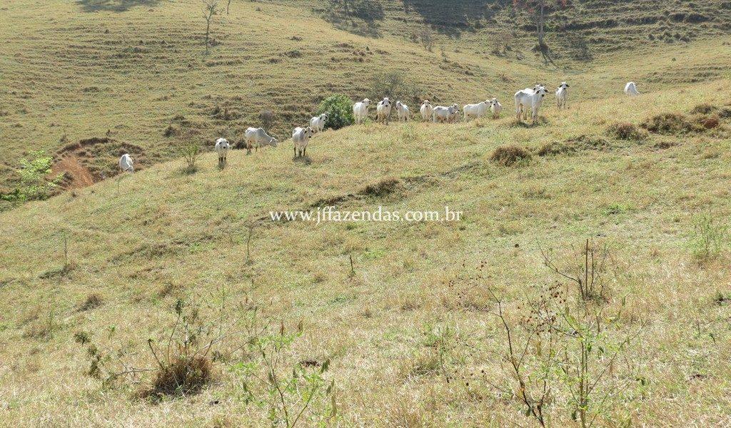 Fazenda em Juiz de Fora – MG – 82,2 hectares