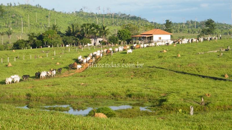 Fazenda em Alto Paraíso- RO – 1600 hectares