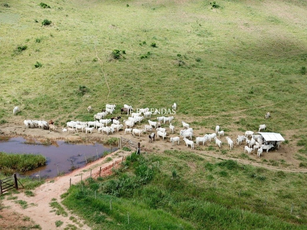 Fazenda em Simão Pereira -MG – 100 hectares