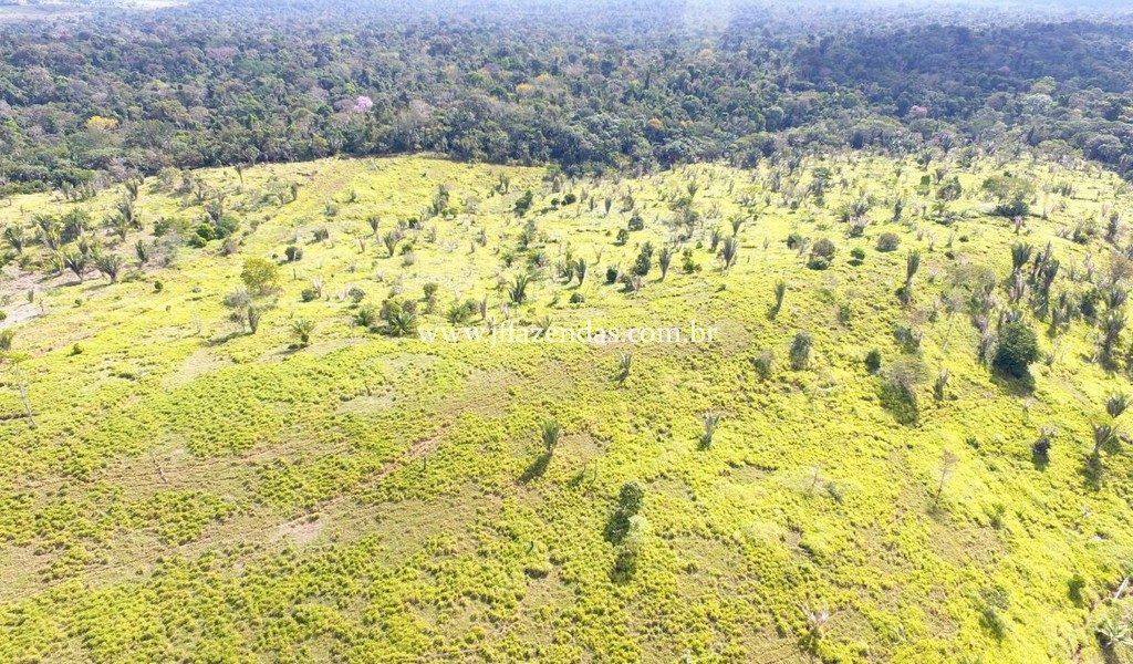 Fazenda no Jaru – RO (1100 alqueires) – 2662 hectares
