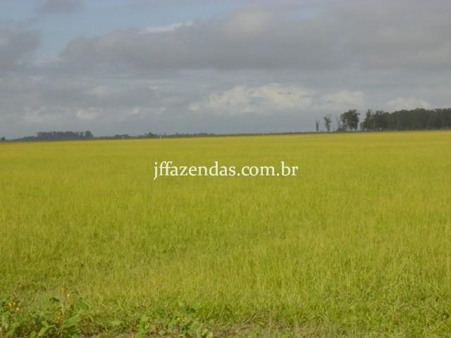 Fazenda em Campos dos Goytacazes – RJ – 4356 hectares