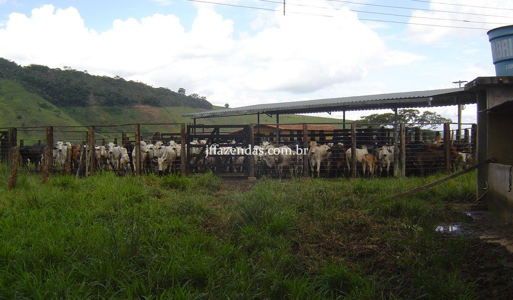 Fazenda em Comendador Levy Gasparian/RJ – 275 hectares