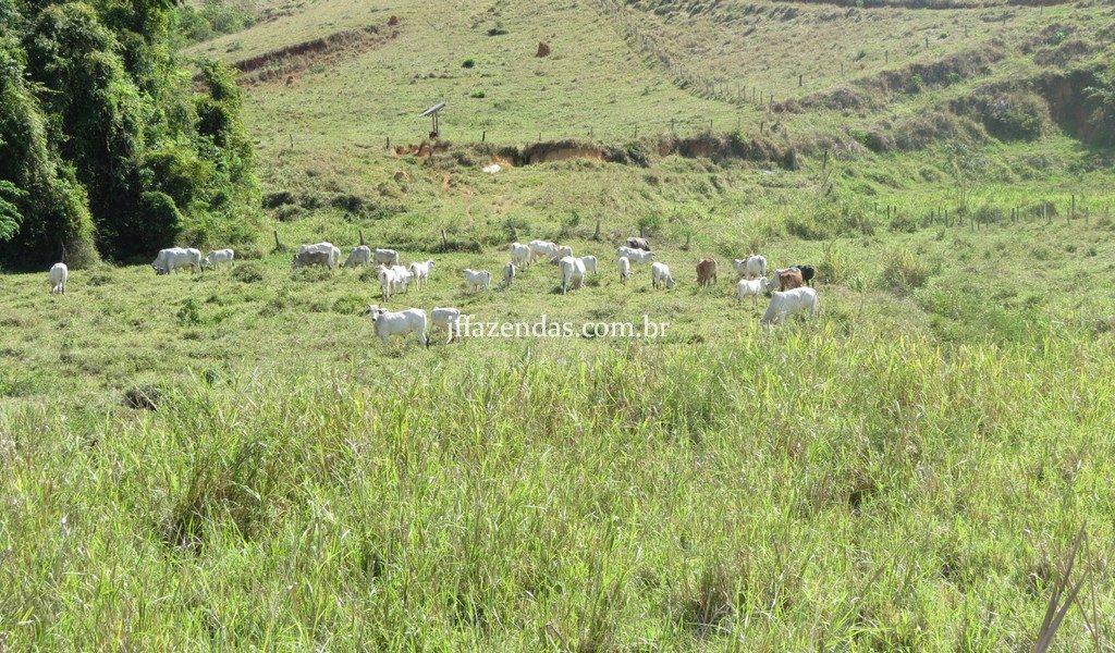 Fazenda em Belmiro Braga – MG – 117 hectares