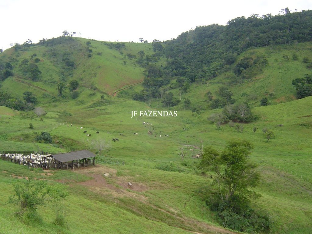 Fazenda em Leopoldina – MG – 145,20 hectares