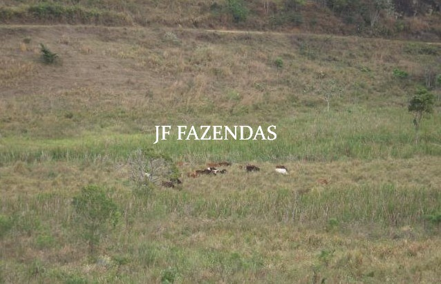Fazenda em Juiz de Fora-MG – 194 hectares