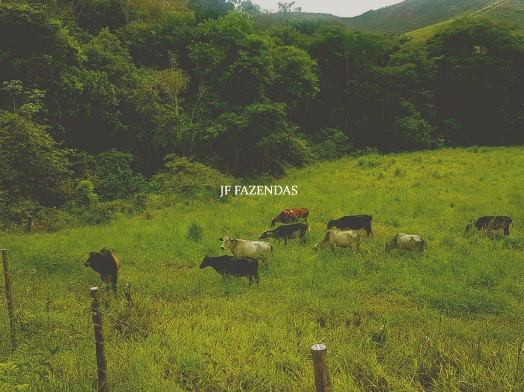 Fazenda em Valença – RJ – 179.08 hectares