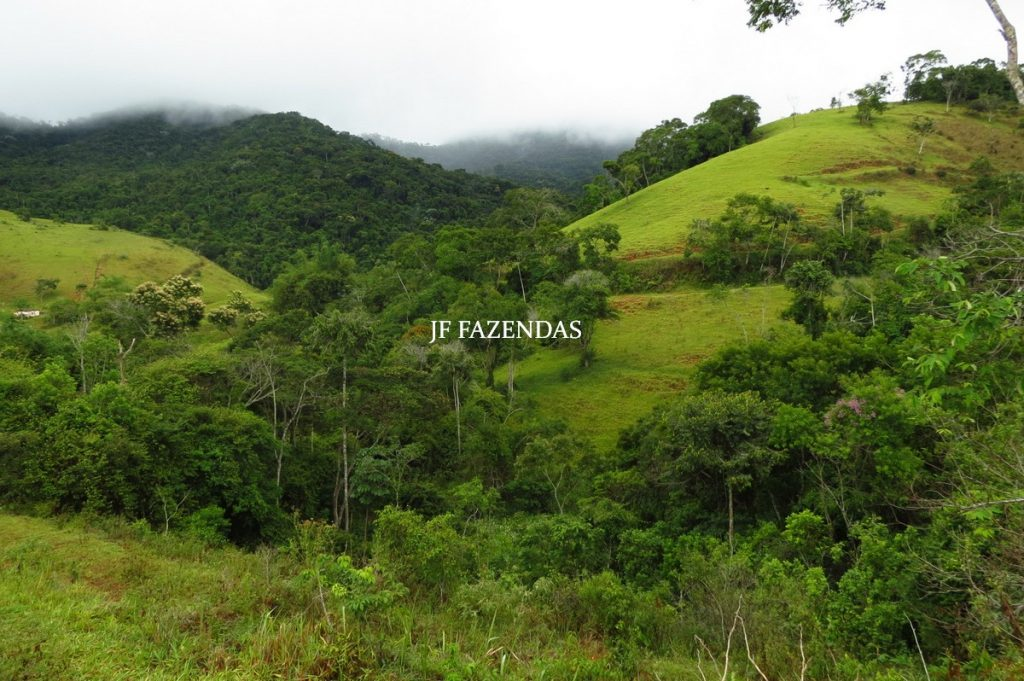 Fazenda em Maripá de Minas-MG – 206 hectares.