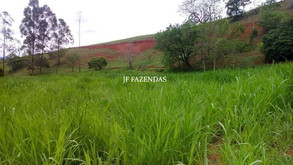 Fazenda em São João Nepomuceno – MG – 75 hectares