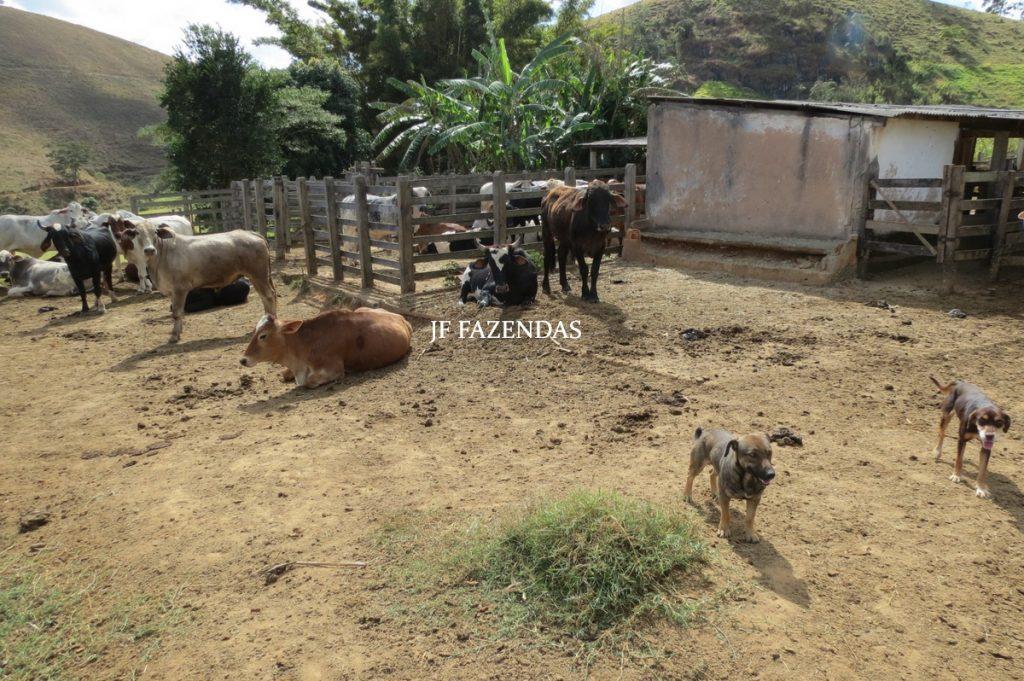 Sitio em Bicas – MG – 35,9 Hectares