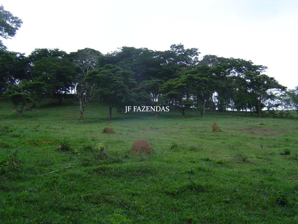 Sitio em Tabuleiro – MG – 14,11.48 hectares