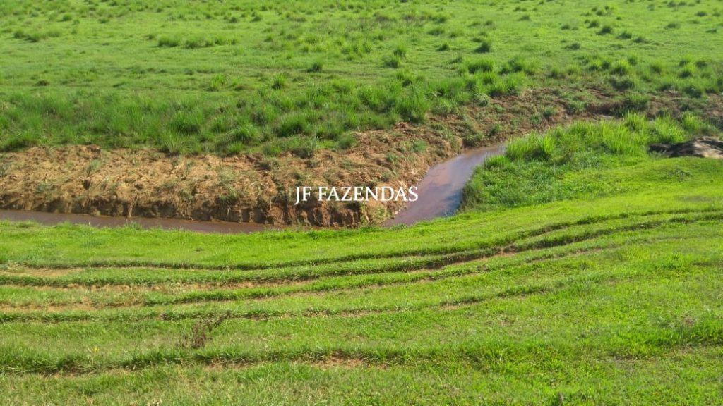 Fazenda em Laranjal – MG – 1568 hectares