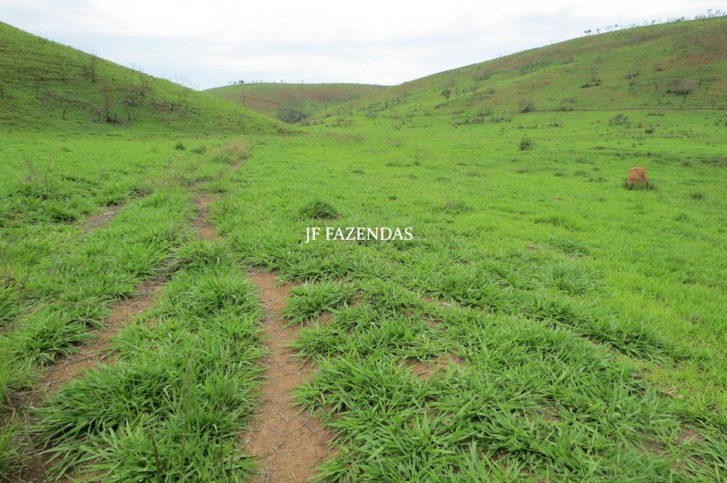 Fazenda em Comendador Levy  Gasparian/ Paraibuna – 238 hectares