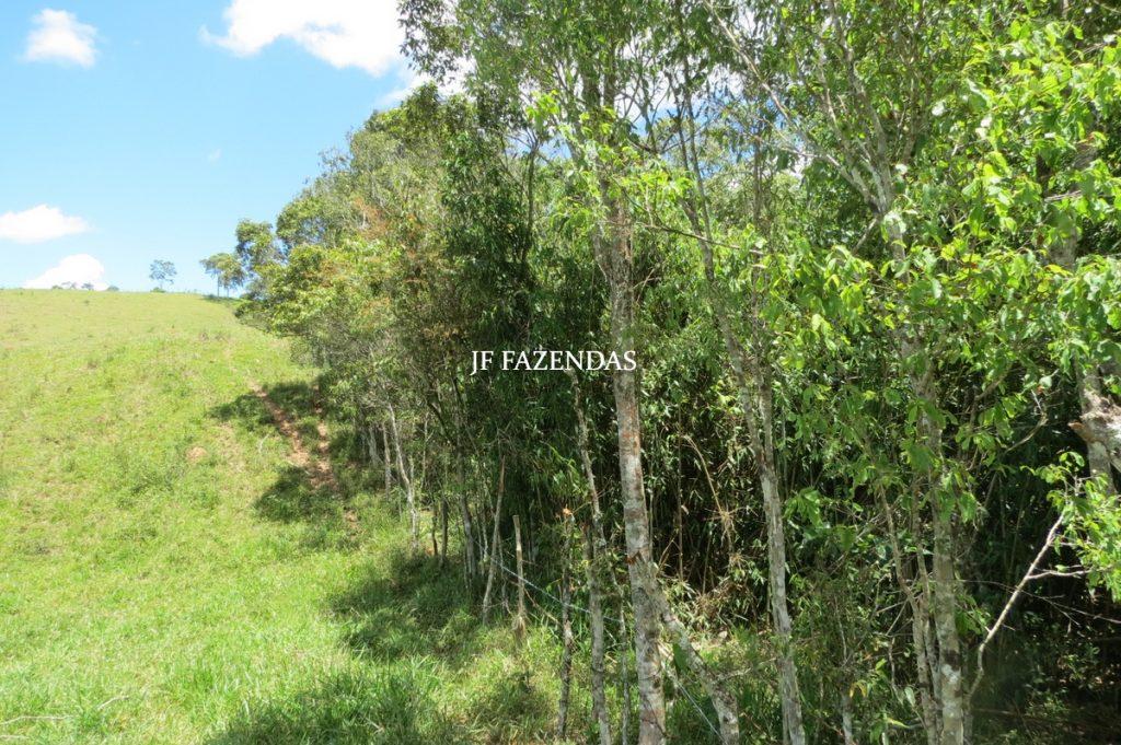 Sítio em Chácara/MG – 39,2 hectares