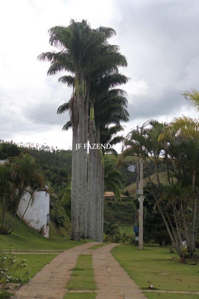 Fazenda em Juiz de Fora – MG  – 100 hectares