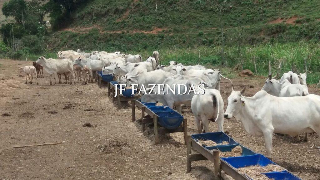 Fazenda em Lima Duarte – MG 126 hectares