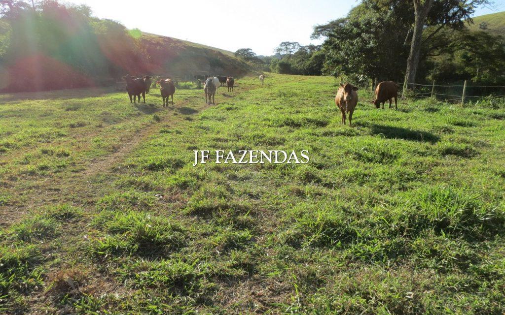Fazenda em Piau/MG 198. 44.74 hectares